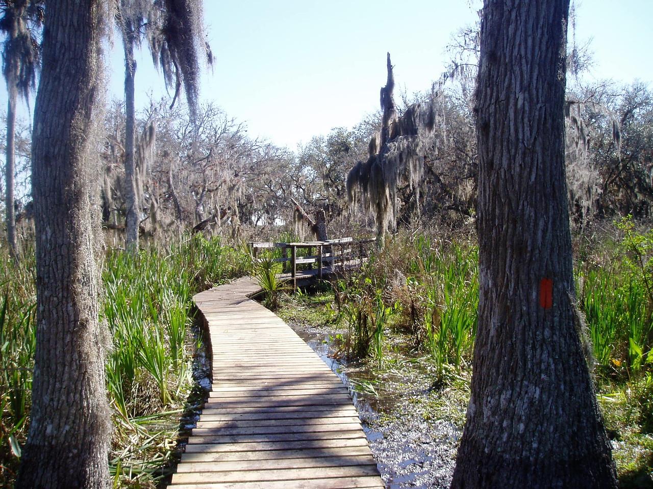Florida Trail boardwalk<br /> location: Boney Marsh<br /> photo credit: Deb Blick / Florida Trail Association