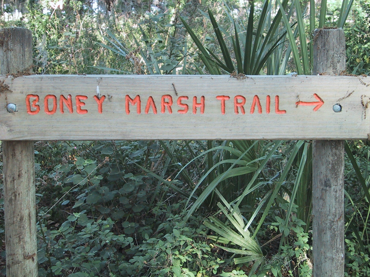 This way to Boney Marsh!<br /> location: Boney Marsh<br /> photo credit: Paul Guyon / Florida Trail Association