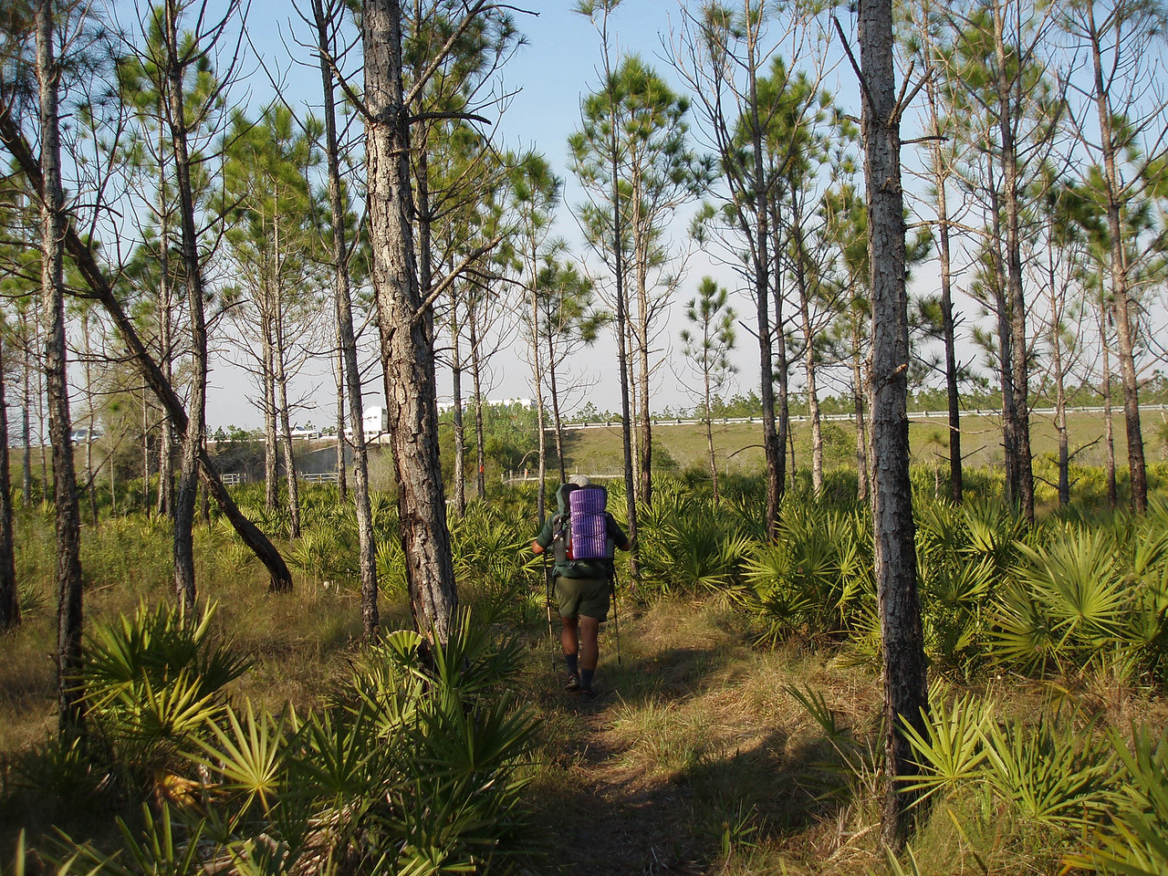 Hiking towards Florida's Turnpike<br /> PHOTO CREDIT: Robert Coveney / Florida Trail Association