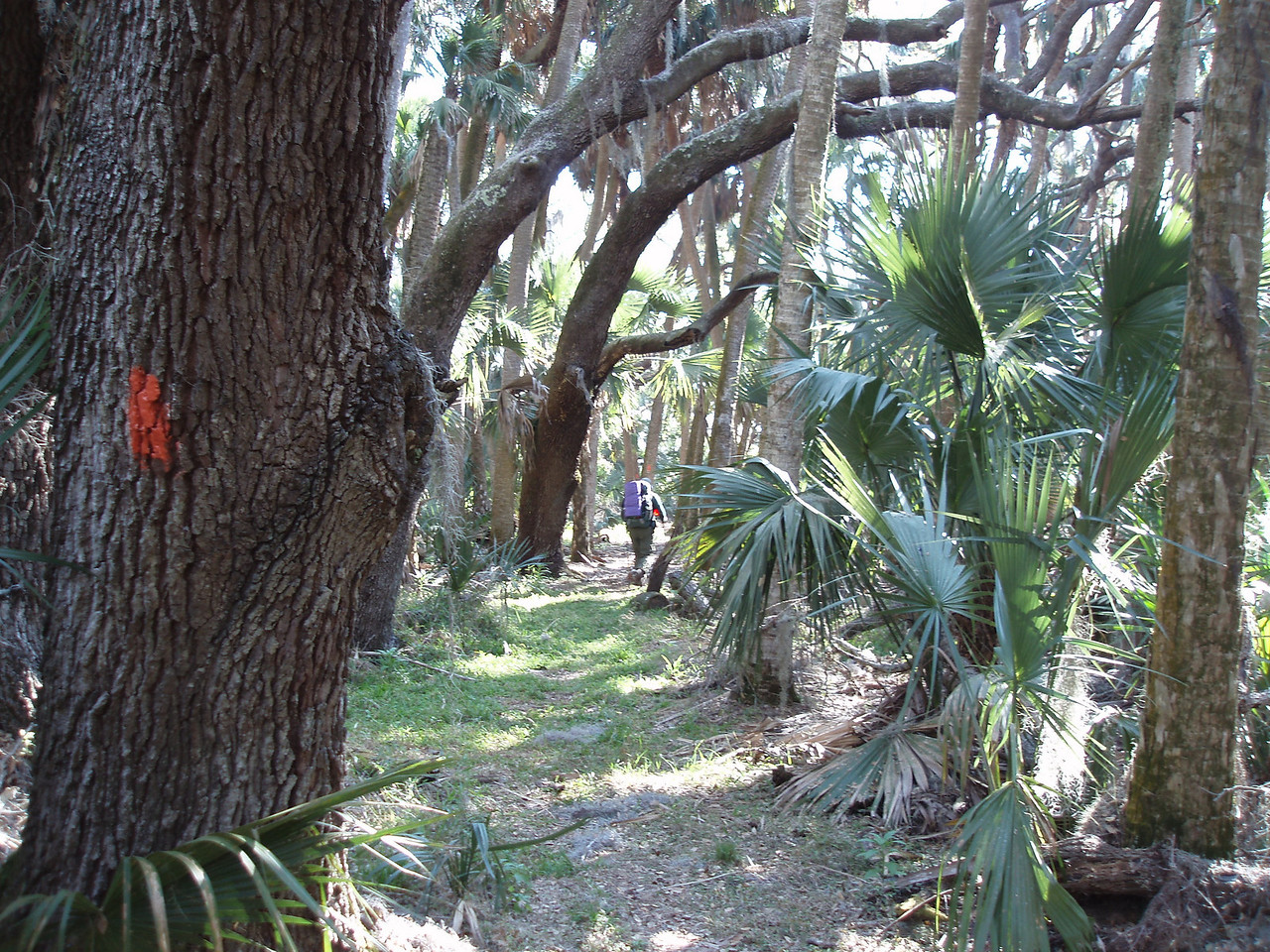 In a shady hammock<br /> PHOTO CREDIT: Robert Coveney / Florida Trail Association