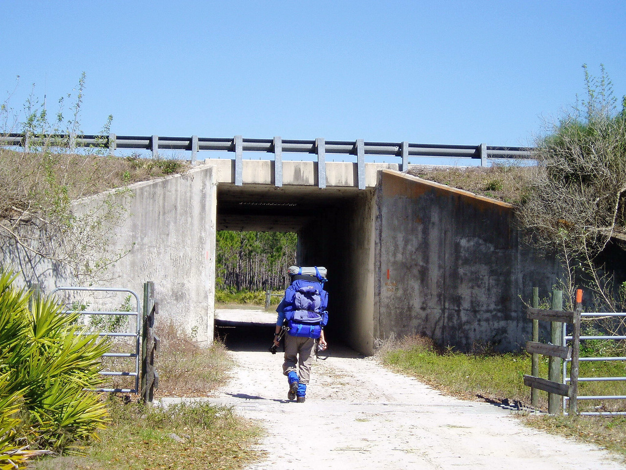Passing under Florida's Turnpike<br /> location: Three Lakes WMA<br /> photo credit: Deb Blick / Florida Trail Association