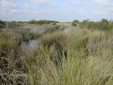 Canaveral Marshes (Sandra Friend)