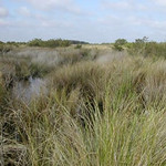 Canaveral Marshes<br /> Photo by Sandra Friend