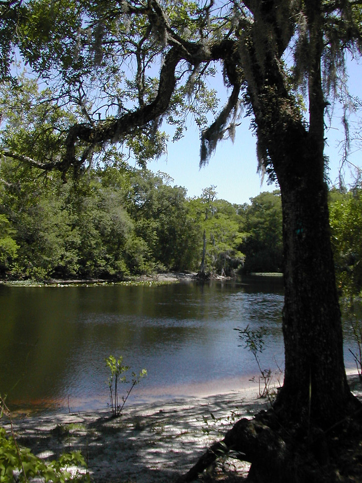View of the Withlacoochee River<br /> Photo by Sandra Friend