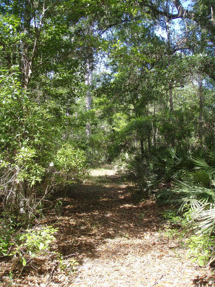 Trail in Potts Preserve<br /> Photo by Deb Blick