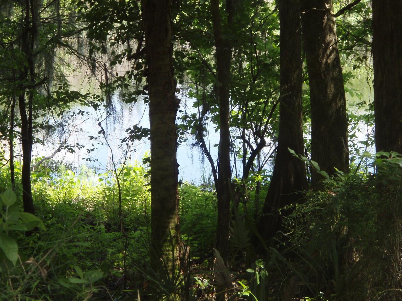 View along the trail in Potts Preserve<br /> Potts Preserve Trail
