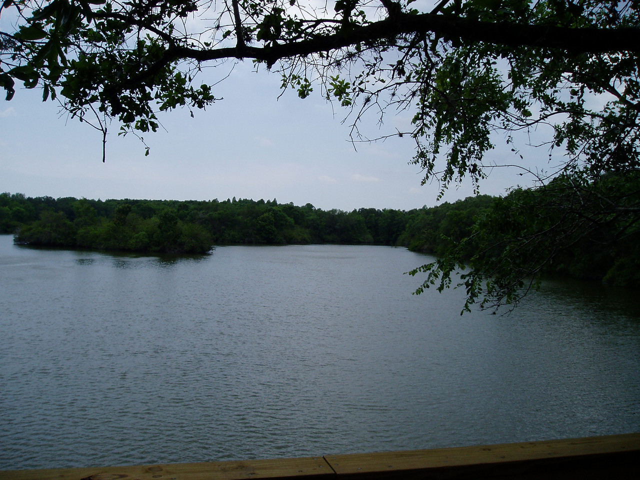 One of the many lakes in Tenoroc<br /> Photo by Deb Blick