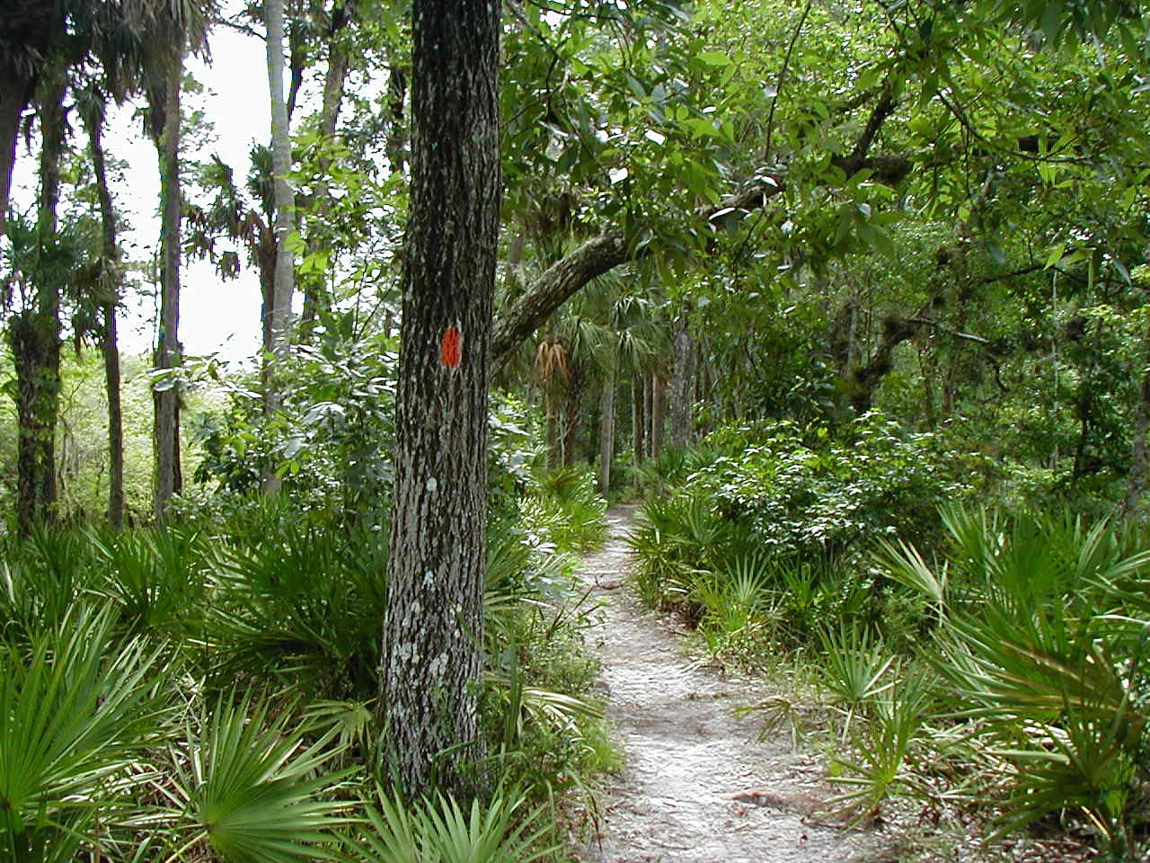 Tosohatchee trail<br /> Photo by Deb Blick