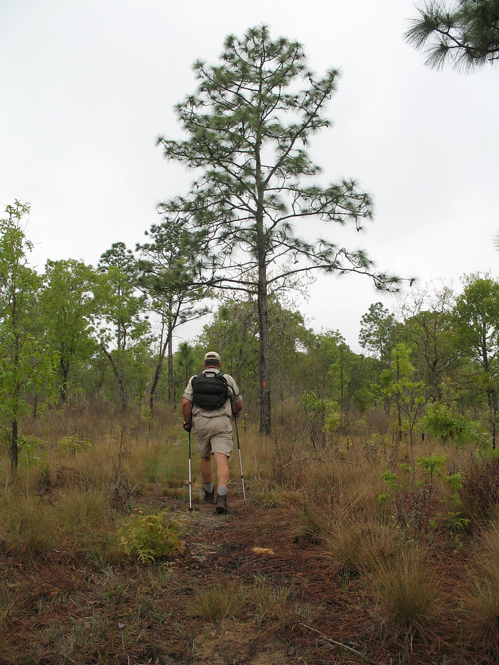 Citrus Tract<br /> Withlacoochee State Forest<br /> PHOTO CREDIT: Sandra Friend