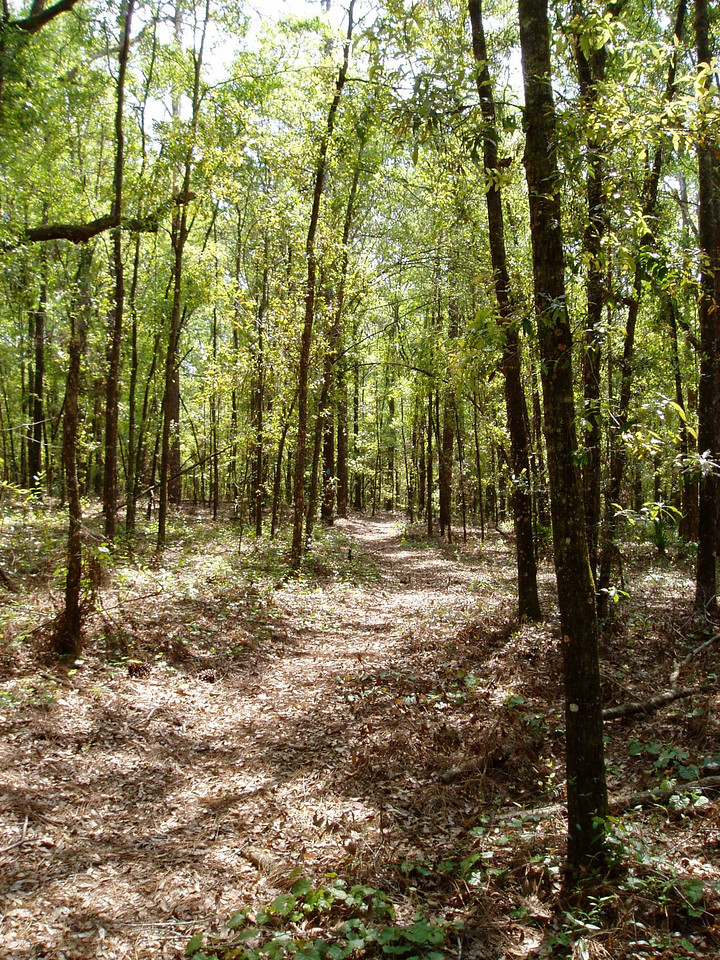Croom Hiking Trail<br /> location: Ridge Manor<br /> photo credit: FTA / Deb Blick