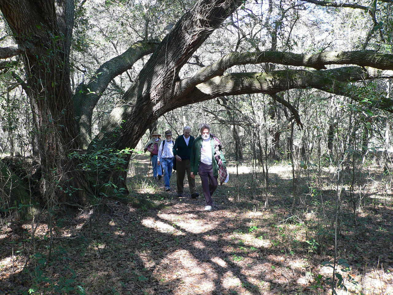 Hiking Spider Kingdom<br /> PHOTO CREDIT: Florida Trail Association / Diane Dammiller