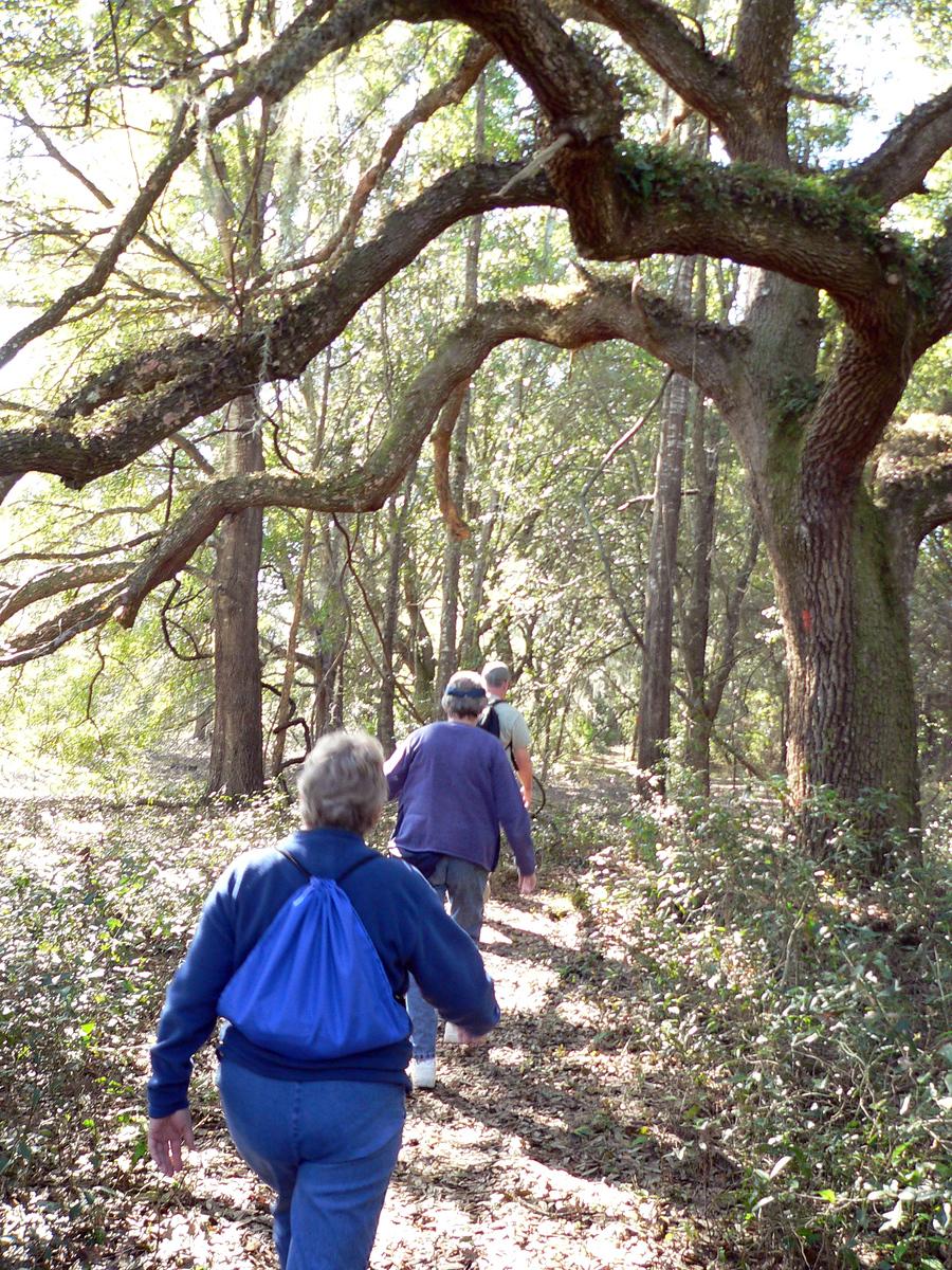 Hiking the Land Bridge section<br /> PHOTO CREDIT: Florida Trail Association / Diane Dammiller