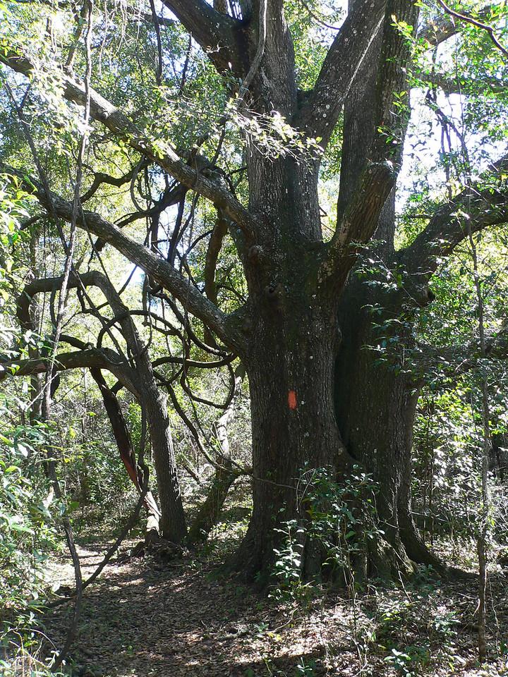 Typical of the Land Bridge loop<br /> PHOTO CREDIT: Florida Trail Association / Diane Dammiller