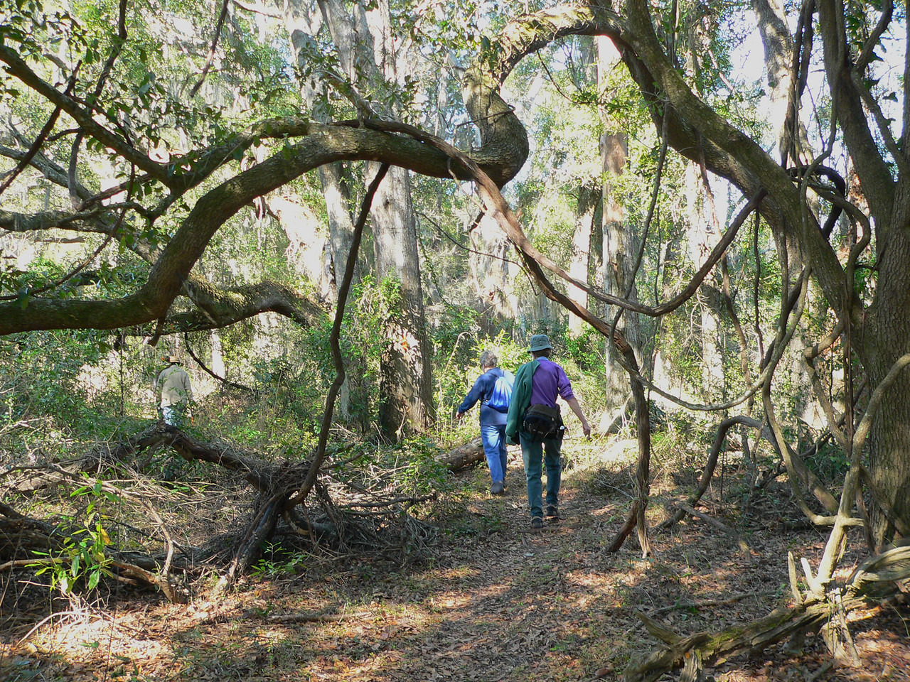Under gnarled oaks<br /> PHOTO CREDIT: Florida Trail Association / Diane Dammiller