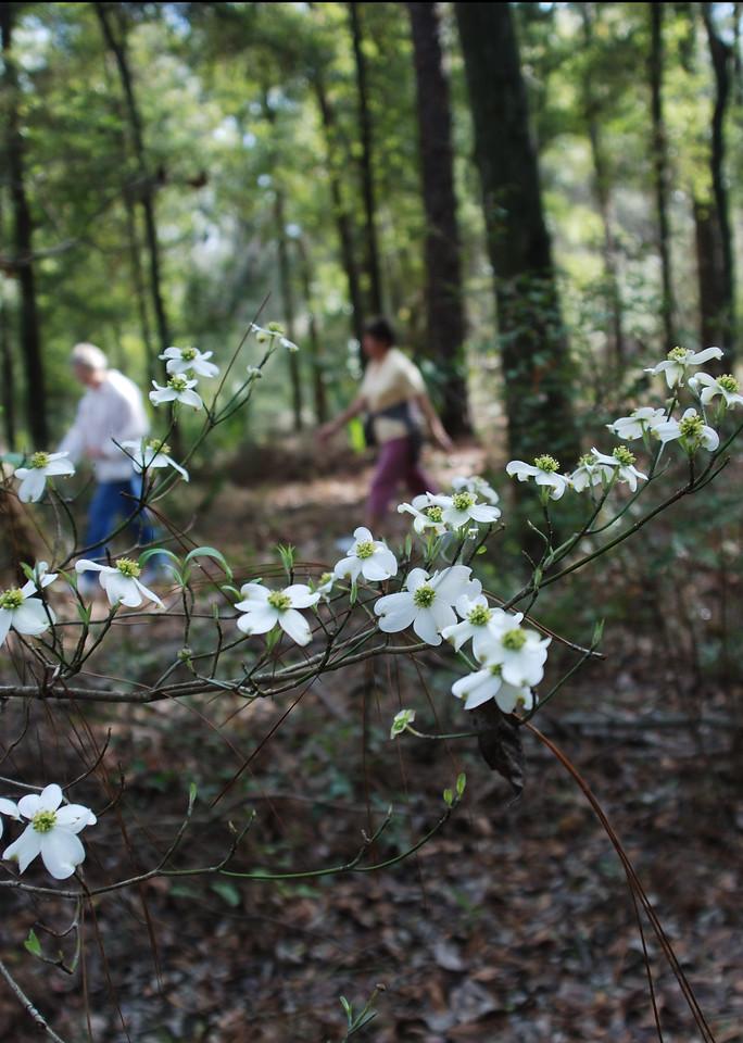 Spring hiking on the Cross Florida Greenway<br /> PHOTO CREDIT: Florida Trail Association / Diane Dammiller