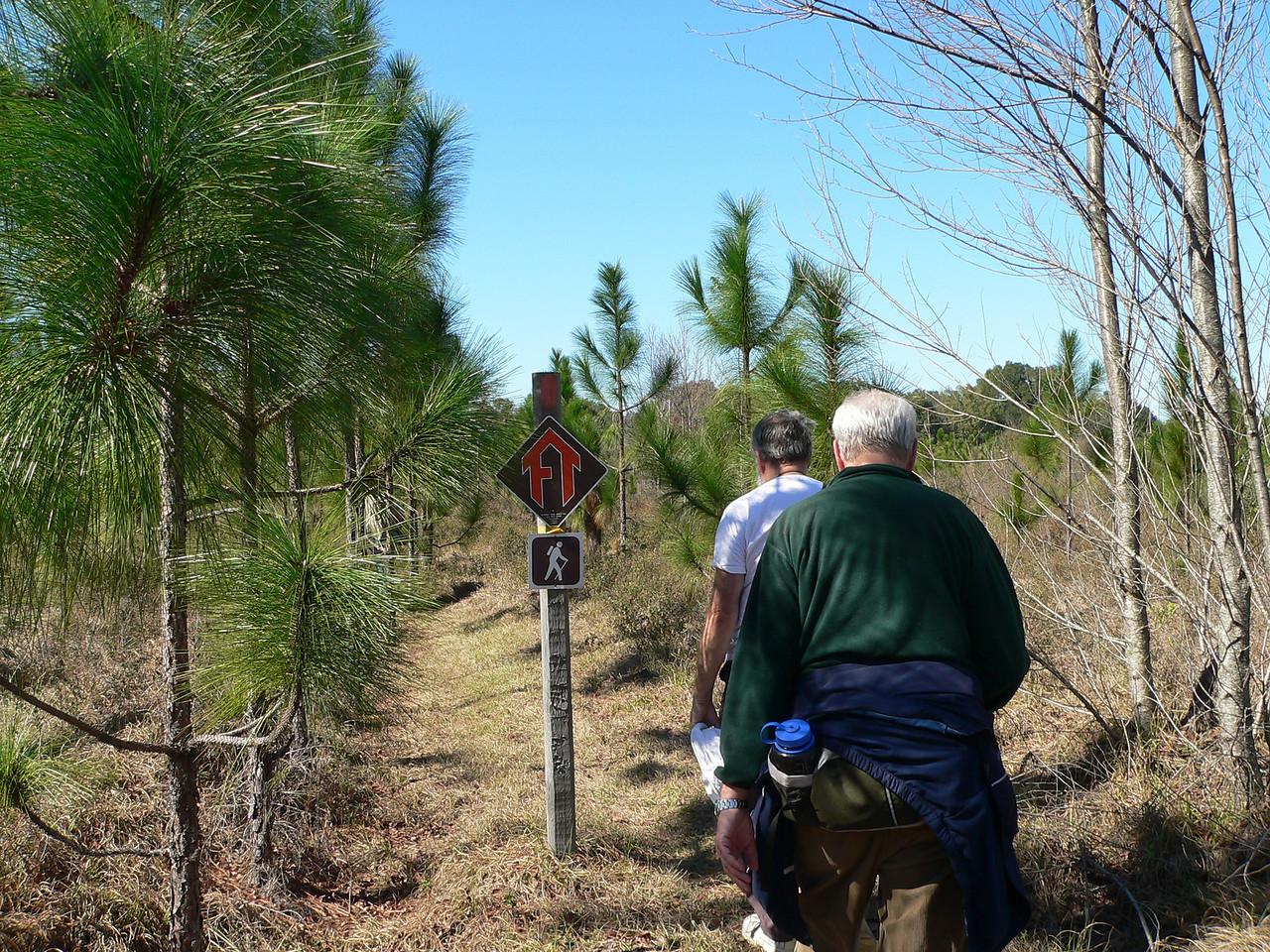 Through young longleaf pine restoration<br /> PHOTO CREDIT: Florida Trail Association / Diane Dammiller