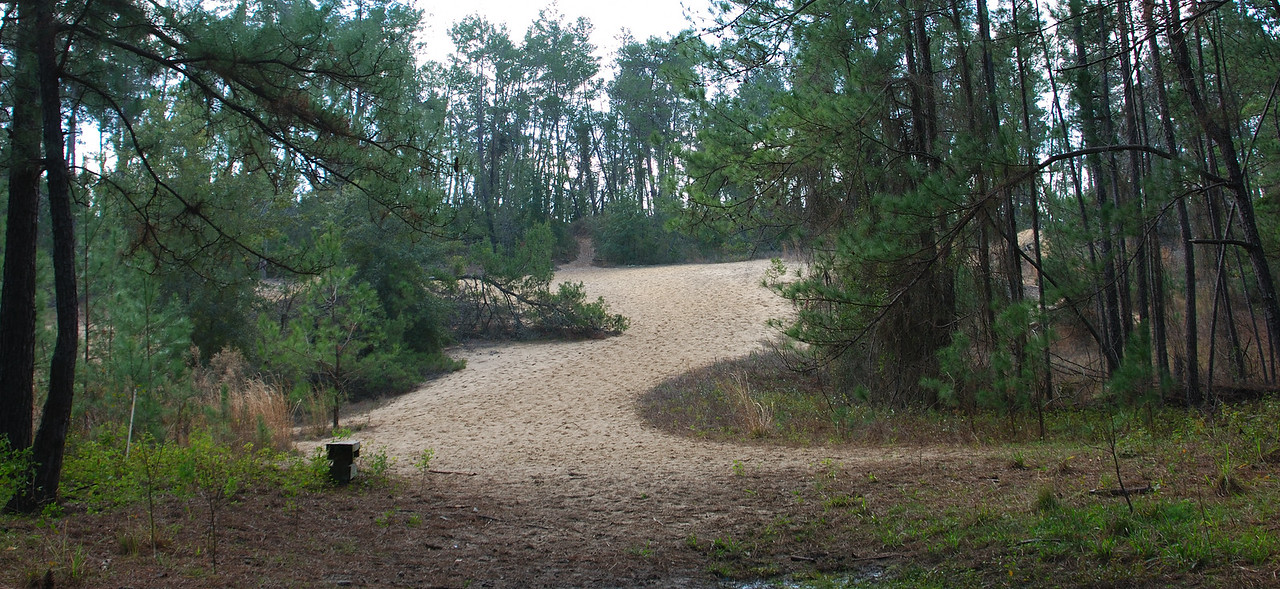 Manmade dunes in the canal diggings<br /> PHOTO CREDIT: Florida Trail Association / Diane Dammiller