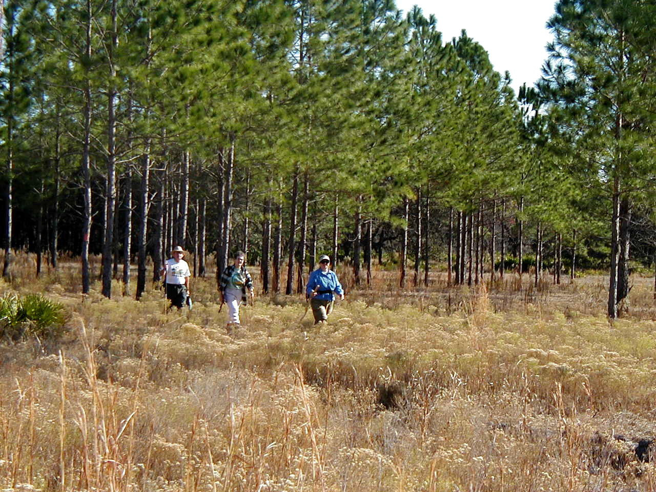 Hikers along the Florida Trail in Green Swamp West  <br /> photo credit: FTA / Deb Blick