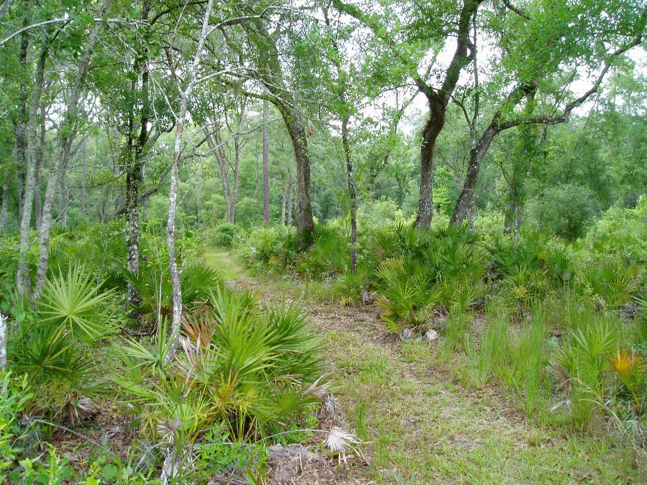 Hardwood forest north of Bridge Rd in Green Swamp West  <br /> photo credit: FTA / Deb Blick