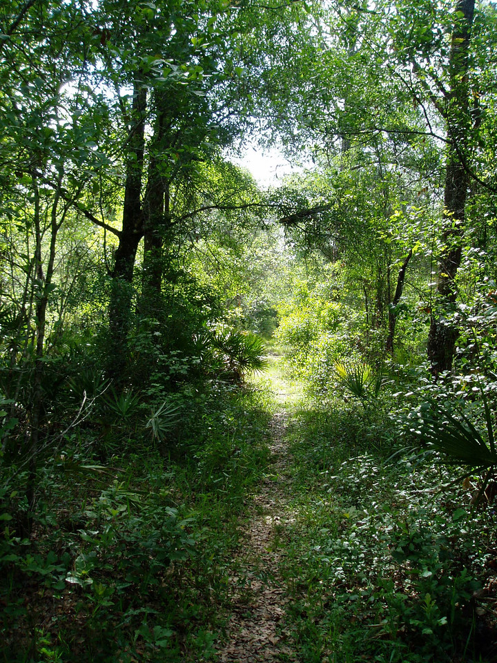 Lush hardwood forest along the trail in Green Swamp East  <br /> photo credit: FTA / Deb Blick