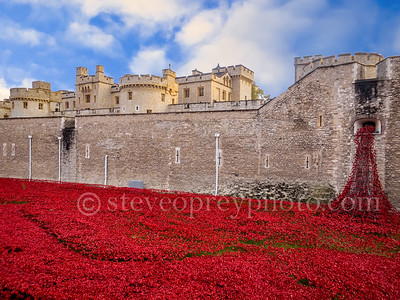 London Poppies 2014