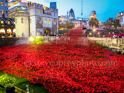 London Poppy Display