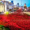 London Poppy Display
