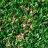 AUGUSTA, ME - OCTOBER 16: This<br /> Saturday October 16, 2021 photo shows the organic fill between the fibers on the new turf surface of Cony's Fuller Field in Augusta. (Staff photo by Joe Phelan/Staff Photographer)