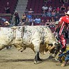 BANGOR, MAINE- JULY 23, 2021<br /> Jason Bowen is saved by the bull fighters after getting thrown from Puddle Dock Road the bull during PBR Velocity Tour rodeo competition at the Cross Insurance Center on Friday, July 23, 2021. (Staff Photo by Michael G. Seamans/Staff Photographer)