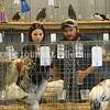 15243# 01fair SKOWHEGAN, MAINE AUGUST 15, 2021. Fairgoers walk through the poultry exhibit at the Skowhegan State Fair in Skowhegan, Maine Sunday August 15, 2021. (Rich Abrahamson/Morning Sentinel)
