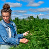 WHITEFIELD, ME - SEPTEMBER 16: Taryn Marcus talks about this year's U Pick Hemp harvest during interview Thursday September 16, 2021 in Whitefield. (Staff photo by Joe Phelan/Staff Photographer)