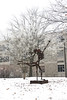"A ghostly appearance of the statue ""Equiponderation"" against the background of rime on the trees on the UCM campus.  Dec. 18, 2008"