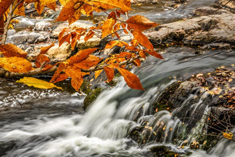 Autumn On the Eno