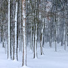 Snow-Striped Trees