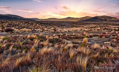 Dry tussock landscape of the Desert Road
