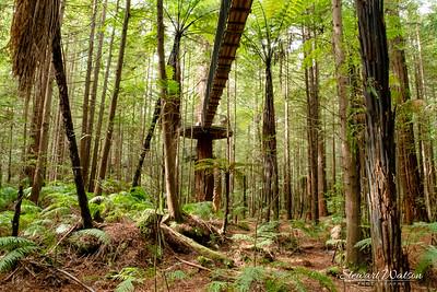 Redwoods walking platform