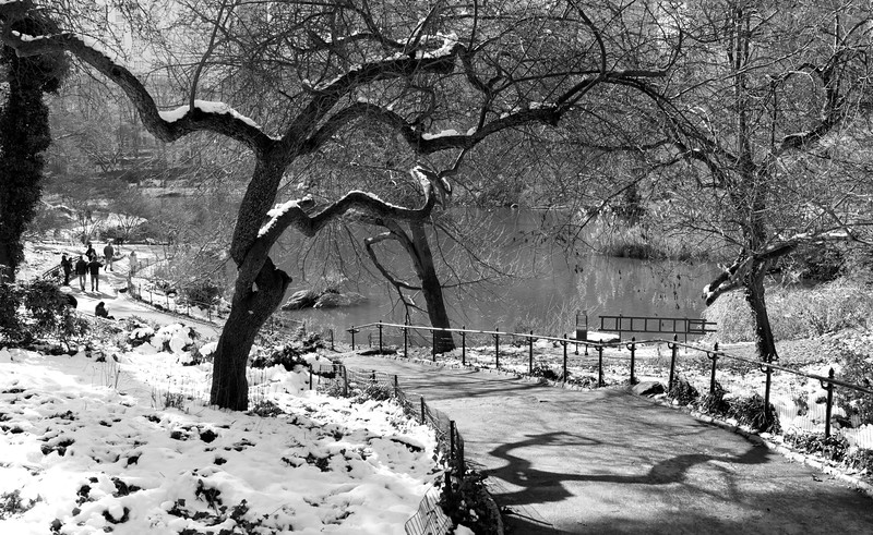 Central Park South _ bw