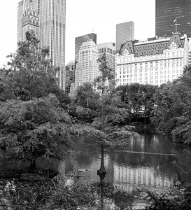 The Pond and Beyond _ bw