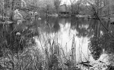 Reed View _bw