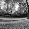 Central Park in Autumn VI _ bw