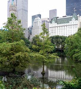 The Pond and Beyond