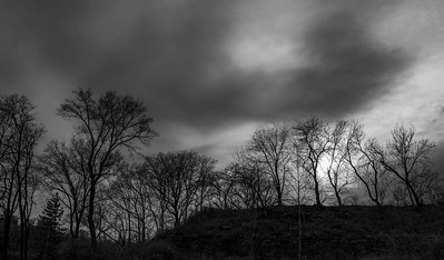 Winter Light _ bw