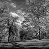 Central Park in Autumn _ bw