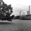 The Sheep Meadow _ bw