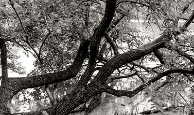 Lake Branches