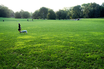 The East Meadow