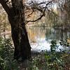 Pool Tree I