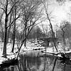 Central Park Ravine III