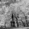 Cherry Blossoms _ bw
