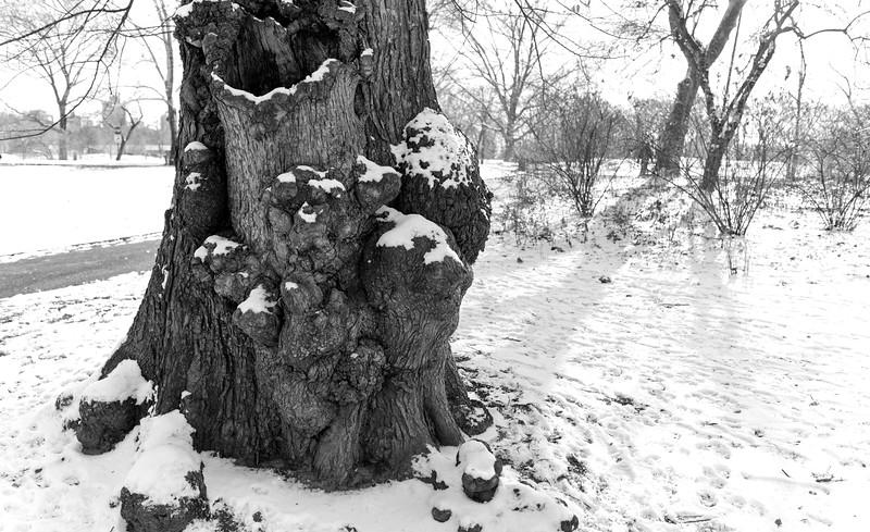 Central Park December IV